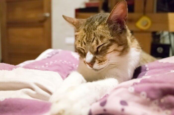vieux chat sur le lit
