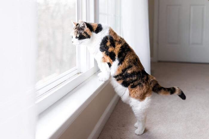 chat regardant par la fenêtre à un oiseau
