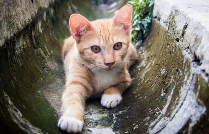 les chats peuvent visiter les égouts la nuit