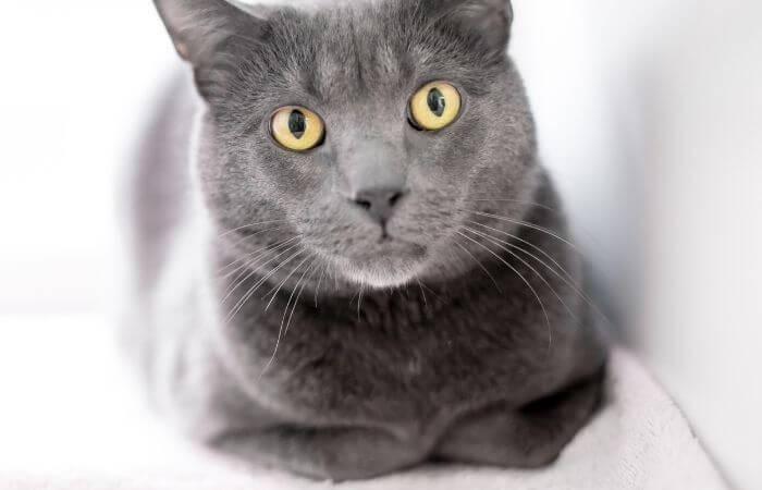 un pain de chat