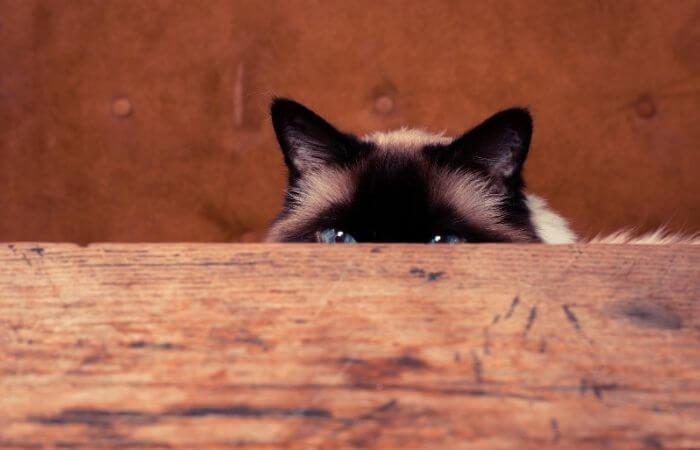 créer des cachettes pour votre chat