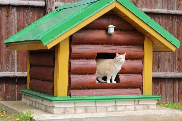 chat dans sa maison de chat en plein air