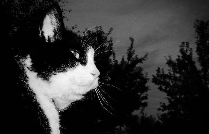où vont les chats la nuit