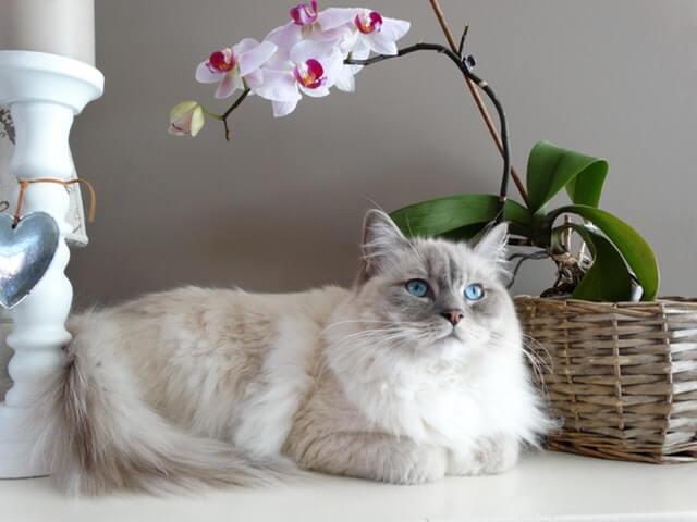 un chat en train de flâner