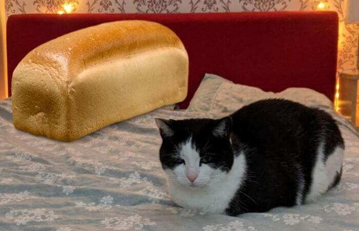 pain de chat
